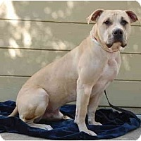 Adopt A Pet :: Seamus - San Francisco, CA