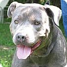 Adopt A Pet :: Cassidy