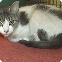 Adopt A Pet :: CLAUDIA - Acme, PA