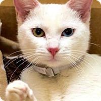 Adopt A Pet :: Cassandra - Irvine, CA