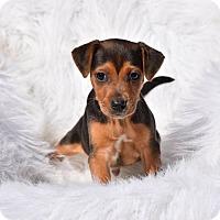 Adopt A Pet :: Mason - Groton, MA