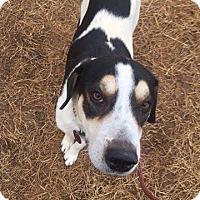 Adopt A Pet :: Kameron - Enfield, CT