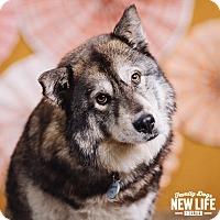 Adopt A Pet :: Saber - Portland, OR