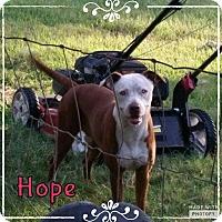 Adopt A Pet :: Hope - Rowlett, TX