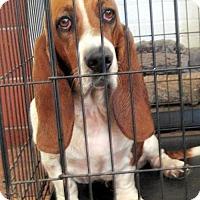 Adopt A Pet :: GABBY - Pennsville, NJ