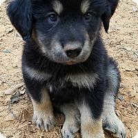 Adopt A Pet :: Moose - pending - Manchester, NH