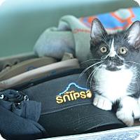 Adopt A Pet :: Oreo - San Antonio, TX