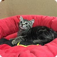 Adopt A Pet :: Nutmeg - Redding, CA