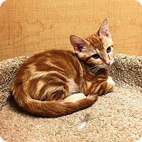 Adopt A Pet :: Cinnamon - Riverside, CA
