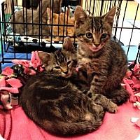 Adopt A Pet :: Dexter and Baxter - Jenkintown, PA