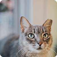Adopt A Pet :: Kitty - Indianapolis, IN