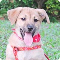 Adopt A Pet :: Corina - San Ramon, CA