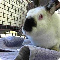 Adopt A Pet :: FRANNY - Sacramento, CA