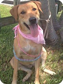 Labrador Retriever Mix Dog for adoption in Davie, Florida - Cecilia