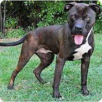 Adopt A Pet :: Malone - Chicago, IL