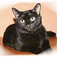 Adopt A Pet :: Mama Cat - Montgomery, IL