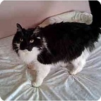 Adopt A Pet :: Sir York - Howell, NJ