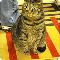 Adopt A Pet :: Foxy Roxy - Mission, BC