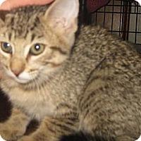 Adopt A Pet :: Guinness - Dallas, TX