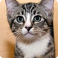 Adopt A Pet :: Batsby - Irvine, CA