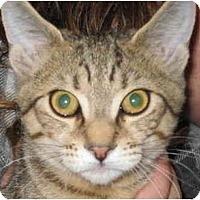 Adopt A Pet :: Angel - Jenkintown, PA