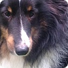 Adopt A Pet :: Brewster