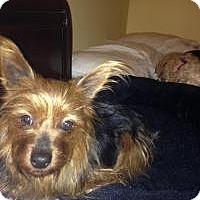 Adopt A Pet :: Patsy - South Amboy, NJ