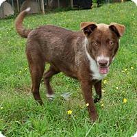 Adopt A Pet :: Jasper - Elizabeth City, NC