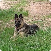 Adopt A Pet :: Lily - Natchitoches, LA