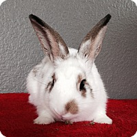 Adopt A Pet :: Beau - Watauga, TX
