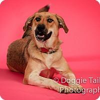 Adopt A Pet :: Pretzel - Bedford, TX