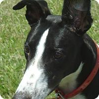 Adopt A Pet :: Barts Drivinaround - Longwood, FL