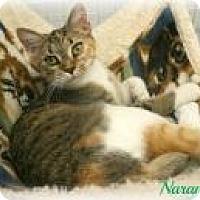 Adopt A Pet :: Naomi - Newport, KY