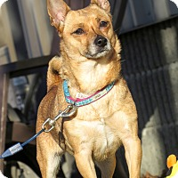 Adopt A Pet :: Belle - Meridian, ID