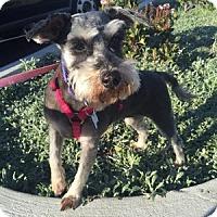 Adopt A Pet :: Dani - Redondo Beach, CA