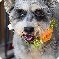 Adopt A Pet :: Mollie Mae - Baton Rouge, LA
