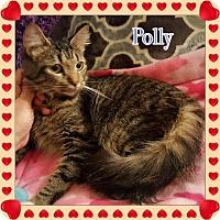 Adopt A Pet :: Polly - Harrisburg, NC