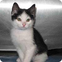 Adopt A Pet :: *PO - Norco, CA