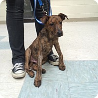 Adopt A Pet :: Nate - Elyria, OH