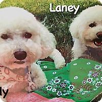 Adopt A Pet :: Brady - East Hanover, NJ