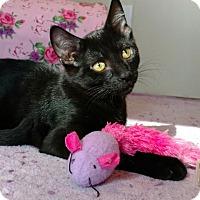 Adopt A Pet :: Smurf - Livonia, MI