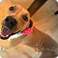 Adopt A Pet :: Leona - Cherry Hill, NJ