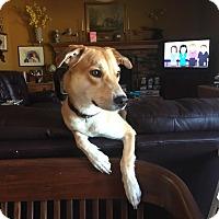 Adopt A Pet :: GiGi  Courtesy Listing - Cleveland, OH