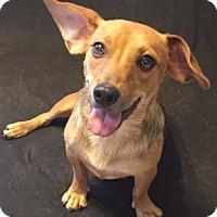 Adopt A Pet :: DiDi Pickles - Providence, RI