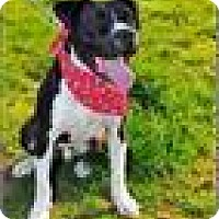 Adopt A Pet :: Dee/Diesel - Freeport, NY