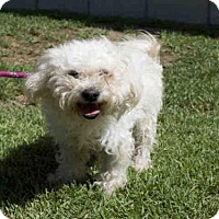 Adopt A Pet :: *FRAGGLE - Long Beach, CA