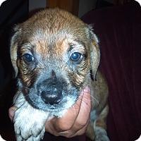 Adopt A Pet :: Sandy - Kendall, NY
