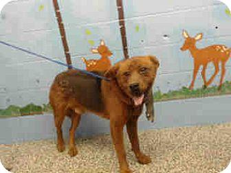 Chow Chow Mix Dog for adoption in San Bernardino, California - URGENT ON 10/22 San Bernardino