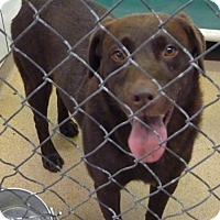 Adopt A Pet :: 47628 Beau sponsored $90 plus tags - Zanesville, OH