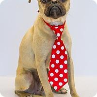 Adopt A Pet :: ChaChi - Phelan, CA